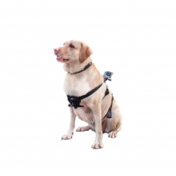 Крепление для GoPro на собаку (Fetch Dog Harness) (в надетом виде)