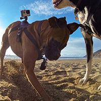 Крепление для GoPro на собаку (Fetch Dog Harness)