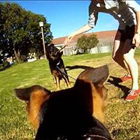 Кріплення для GoPro на собаку (Fetch Dog Harness)
